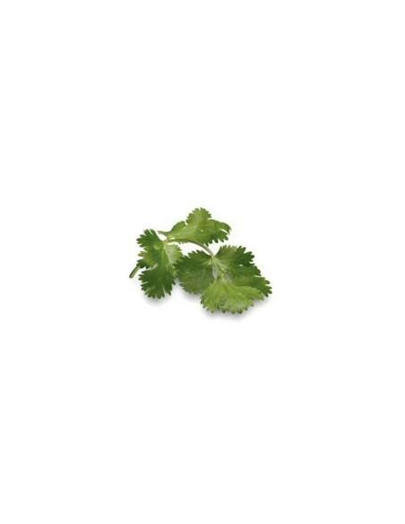 Olio Essenziale di Coriandolo foglie - 10 ml