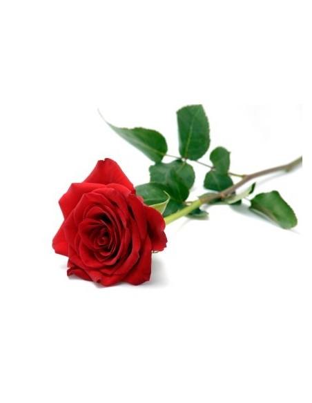 Rosa persia, CONV - 1 ml
