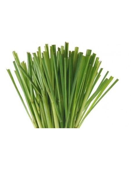lemongrass foglie